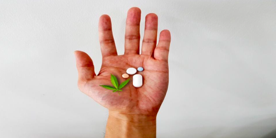 CBD e interação com drogas